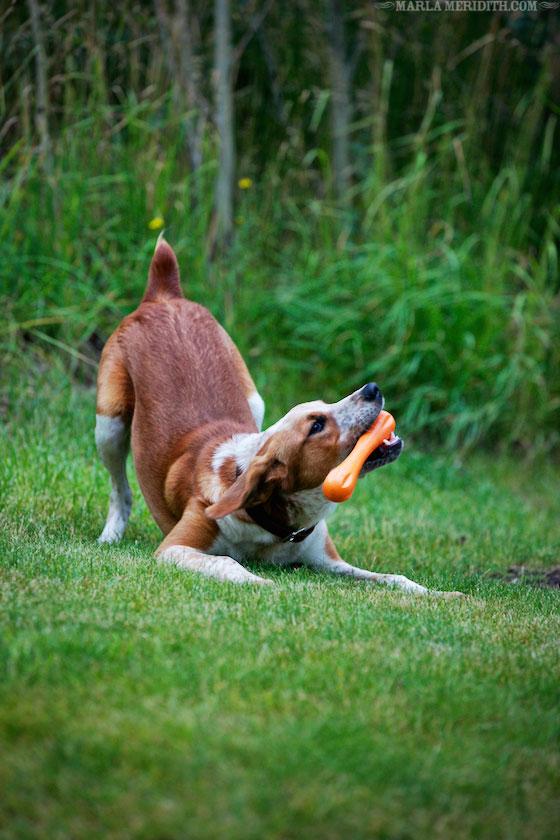 Pup-Marla-Meridith-BO1V4254
