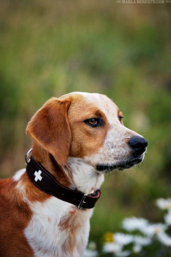Pup-Marla-Meridith-BO1V4276
