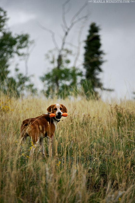 Pup-Marla-Meridith-BO1V4284