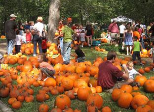 pumpkin-patch-pumpkins