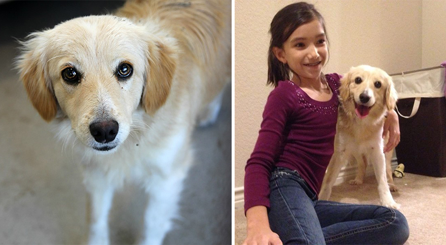 pet-adoption-before-and-after-8__880