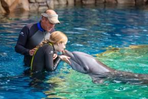 New Dolphin Experience at Sea World San Antonio